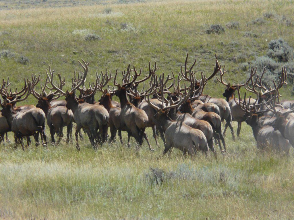 The Elk Room Menu