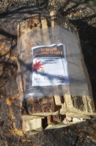 Our bundled firewood is Montana Pine, shrink wrapped with a fire starter for customer convenience.